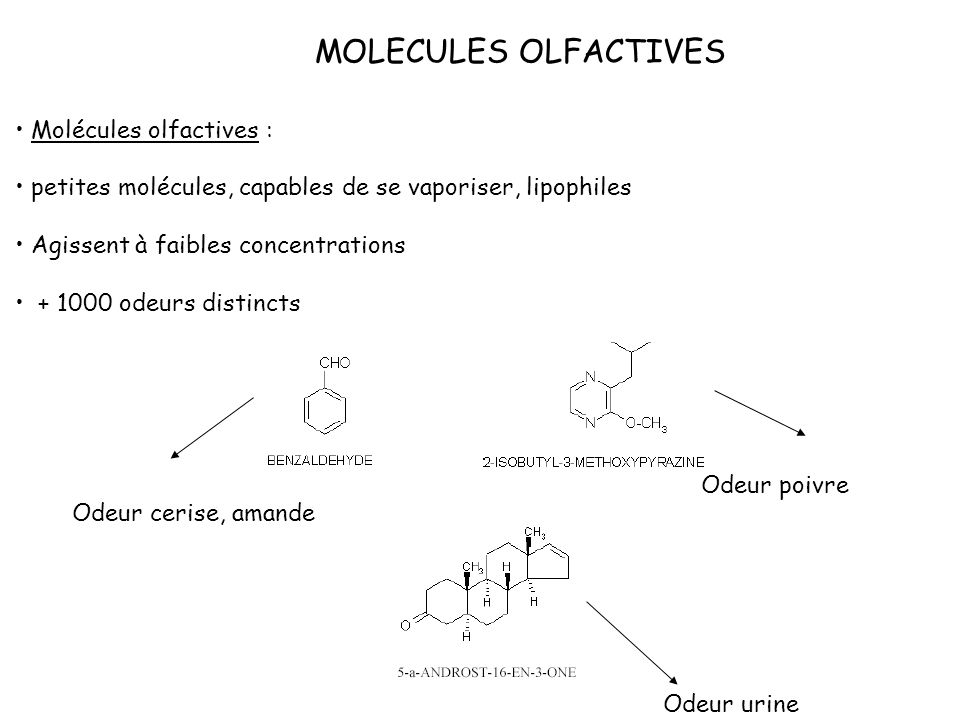 MOLECULES OLFACTIVES Molécules olfactives :