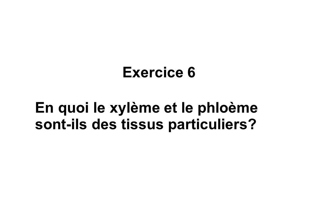 Exercice 6 En quoi le xylème et le phloème sont-ils des tissus particuliers