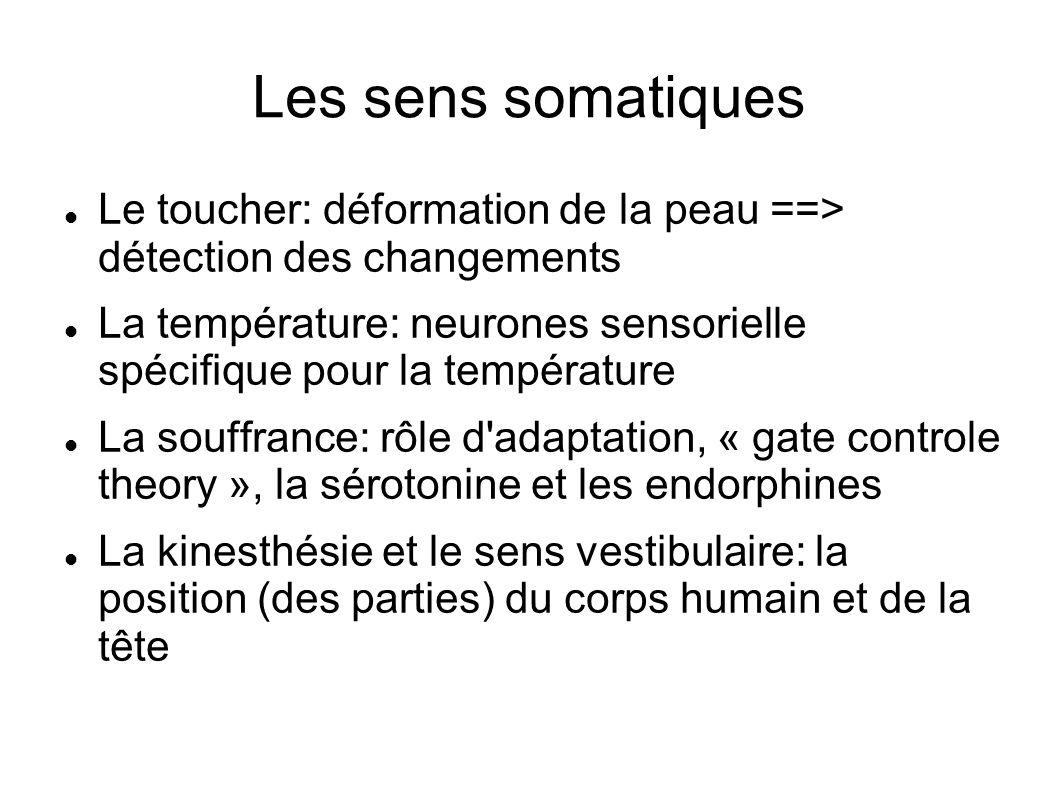 Les sens somatiques Le toucher: déformation de la peau ==> détection des changements.