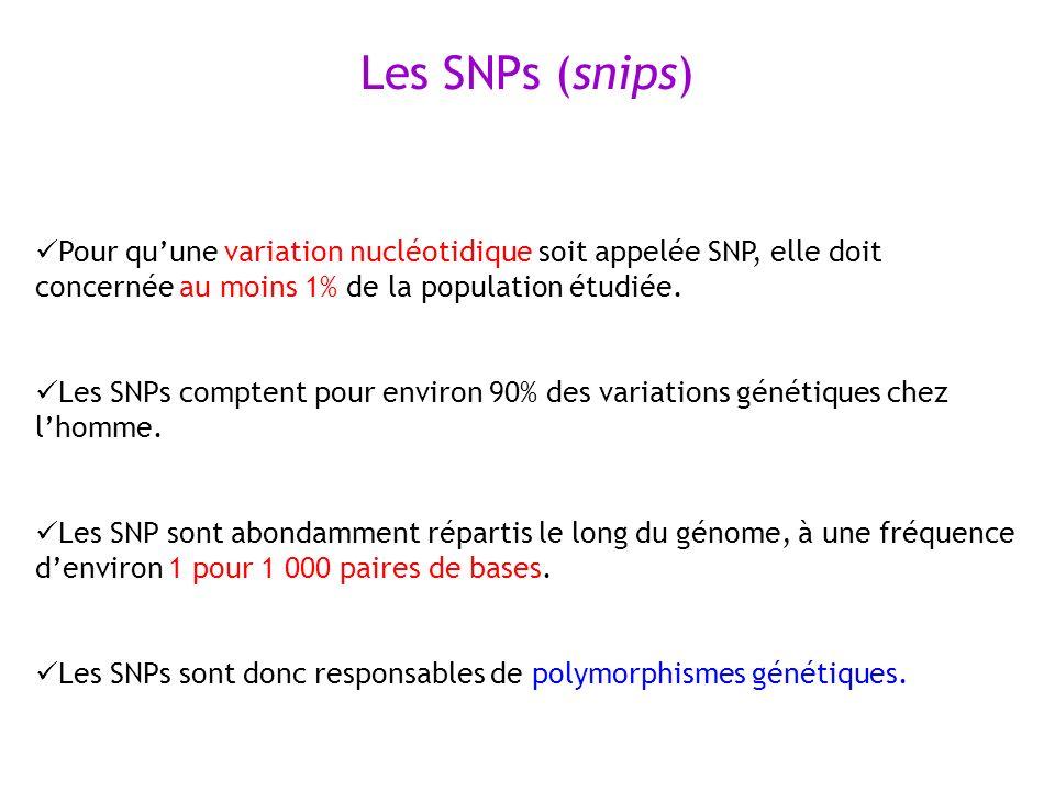 Les SNPs (snips) Pour qu'une variation nucléotidique soit appelée SNP, elle doit concernée au moins 1% de la population étudiée.