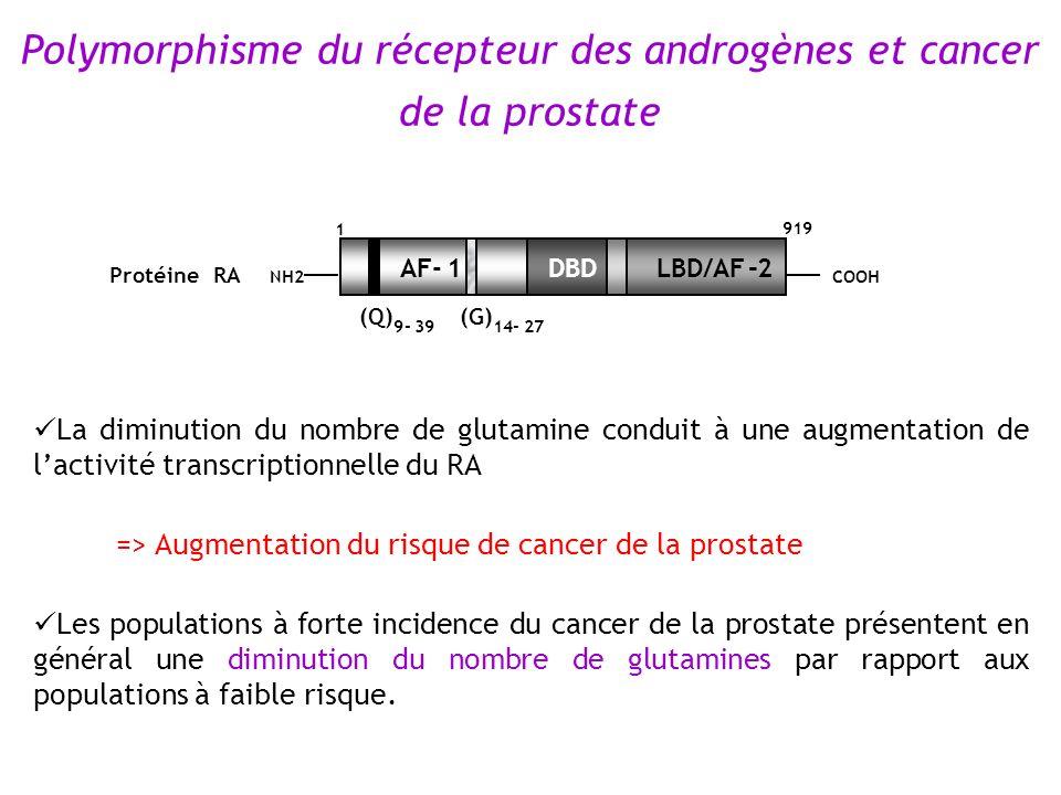 Polymorphisme du récepteur des androgènes et cancer de la prostate