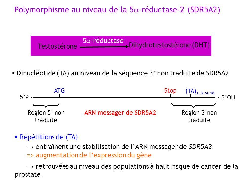 Polymorphisme au niveau de la 5a-réductase-2 (SDR5A2)