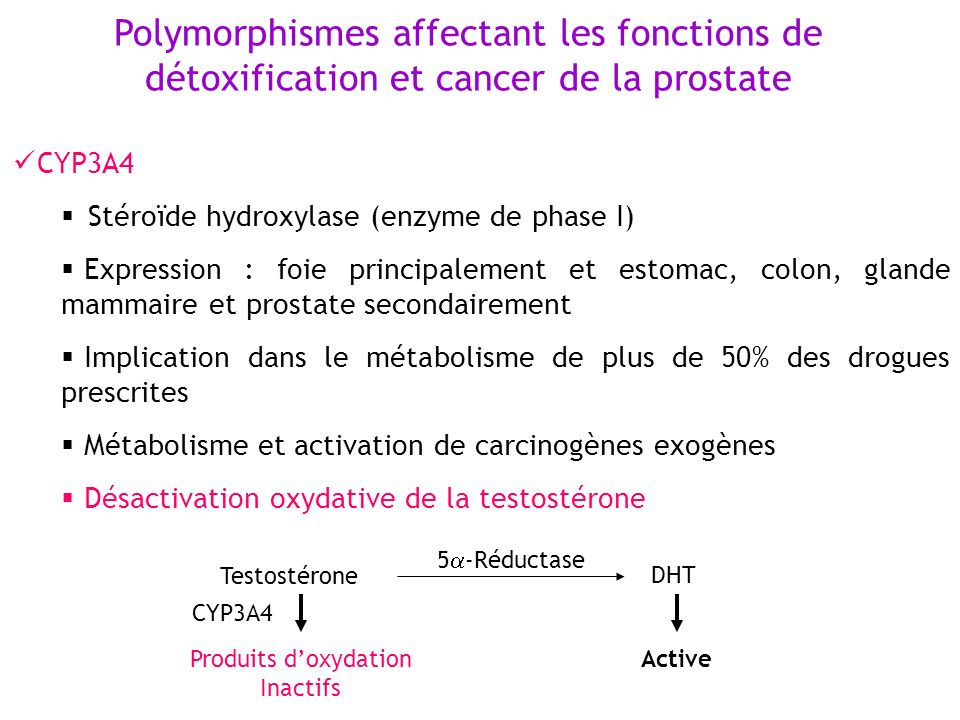 Polymorphismes affectant les fonctions de détoxification et cancer de la prostate