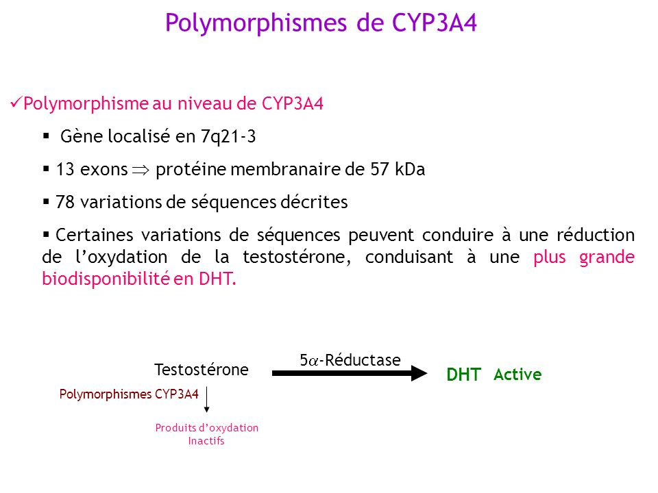 Polymorphismes de CYP3A4