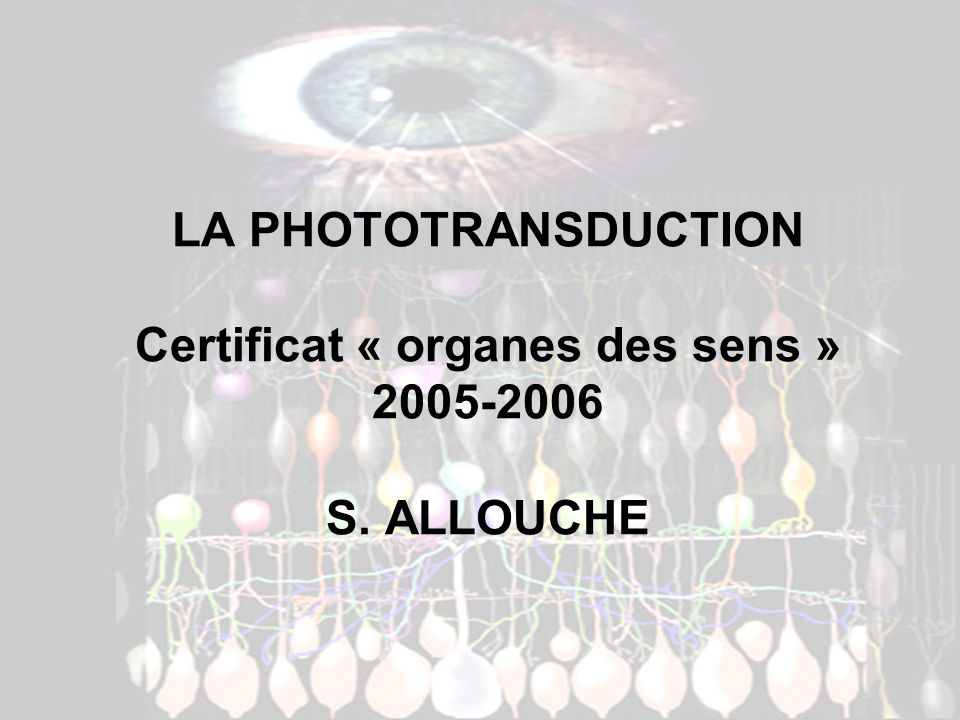 LA PHOTOTRANSDUCTION Certificat « organes des sens » 2005-2006 S