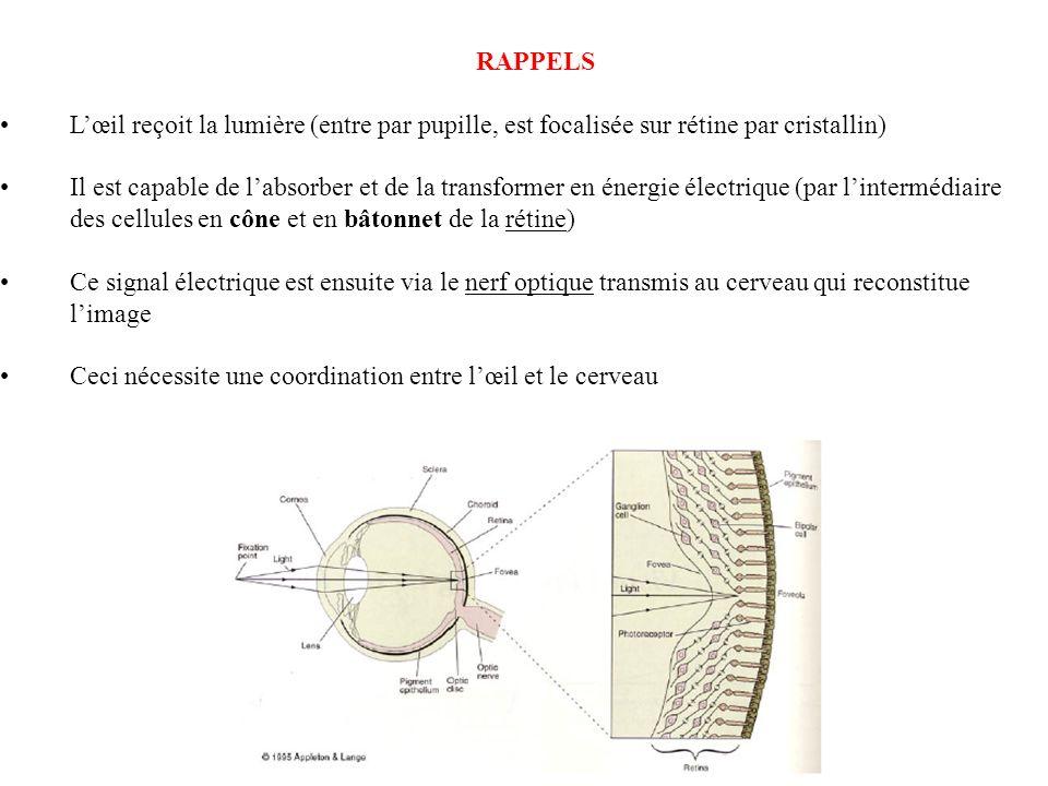 RAPPELSL'œil reçoit la lumière (entre par pupille, est focalisée sur rétine par cristallin)