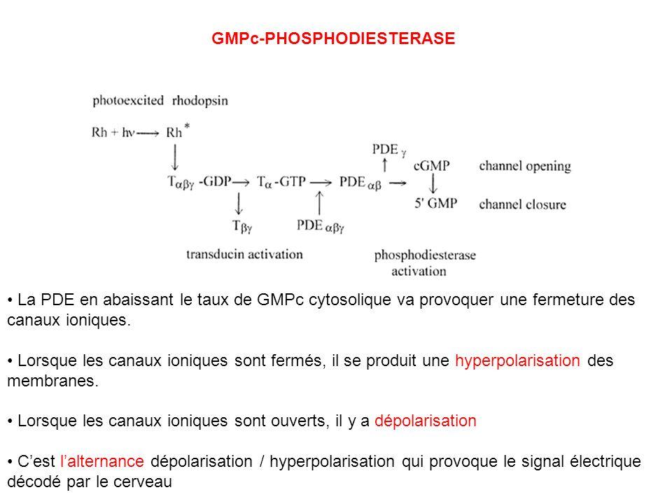 GMPc-PHOSPHODIESTERASE