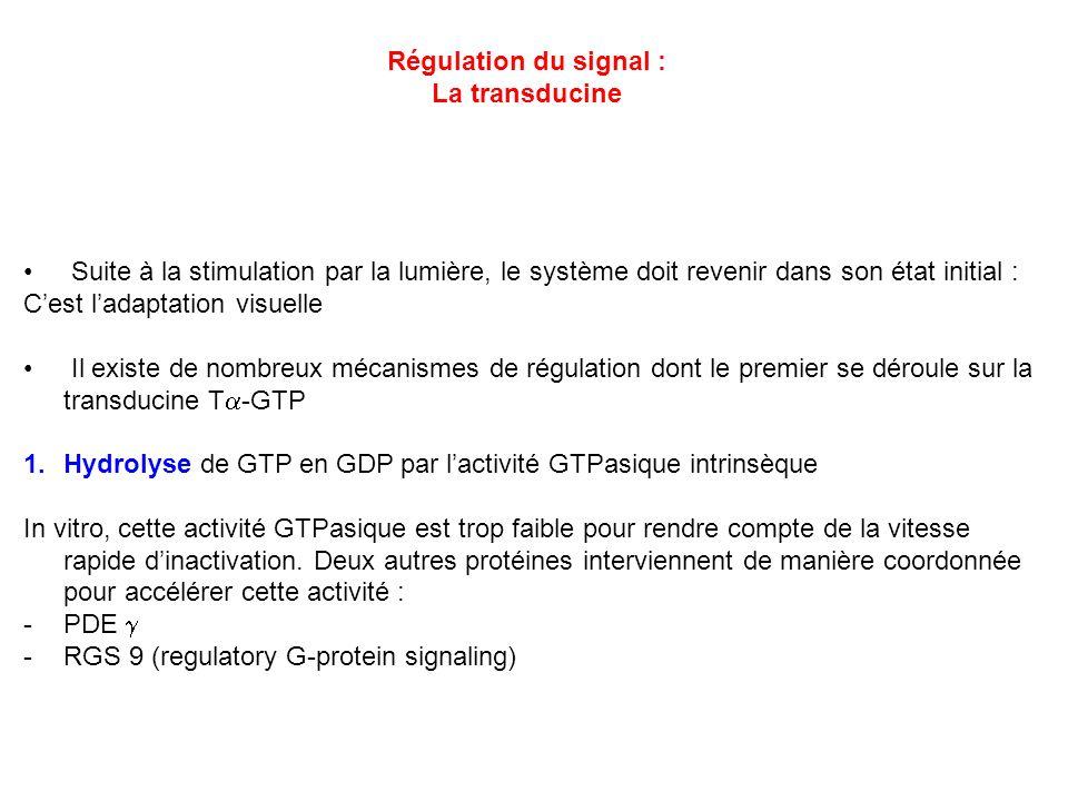 Régulation du signal : La transducine. Suite à la stimulation par la lumière, le système doit revenir dans son état initial :