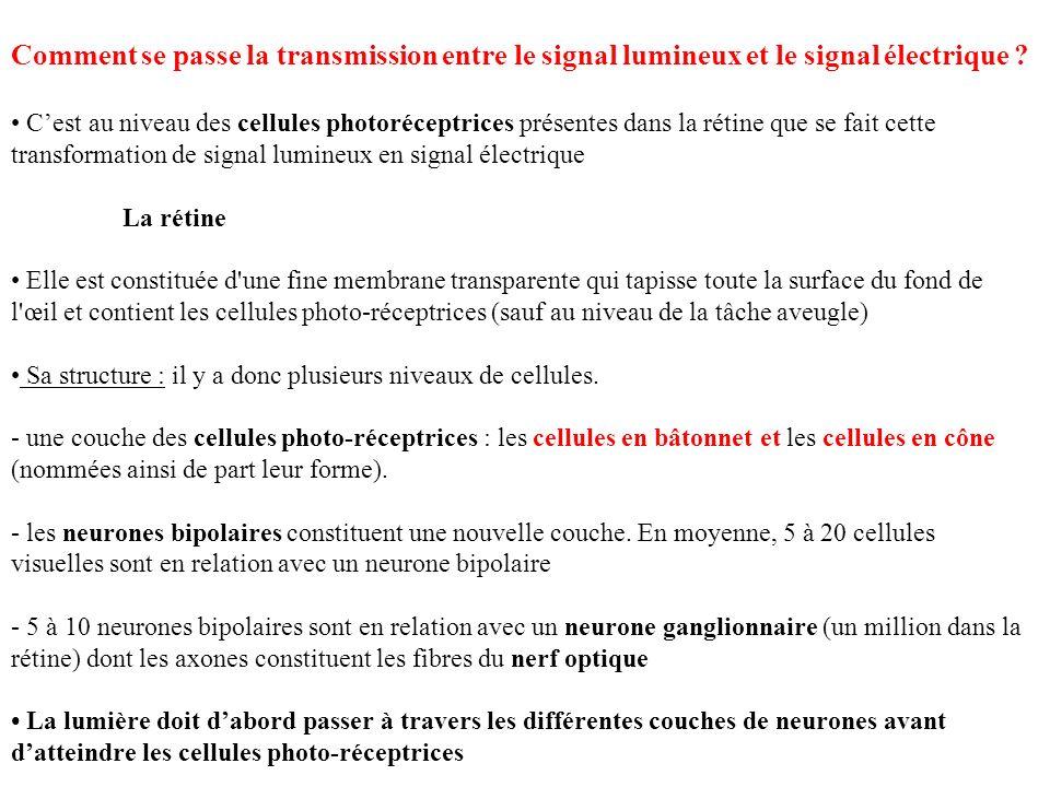 Comment se passe la transmission entre le signal lumineux et le signal électrique
