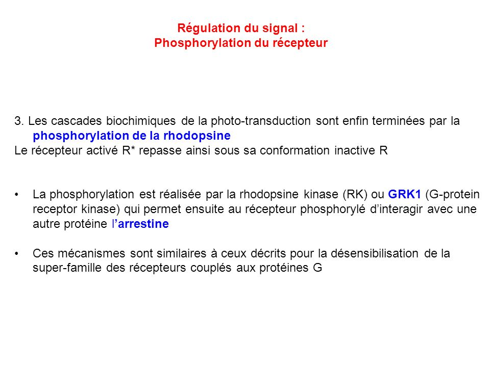 Phosphorylation du récepteur
