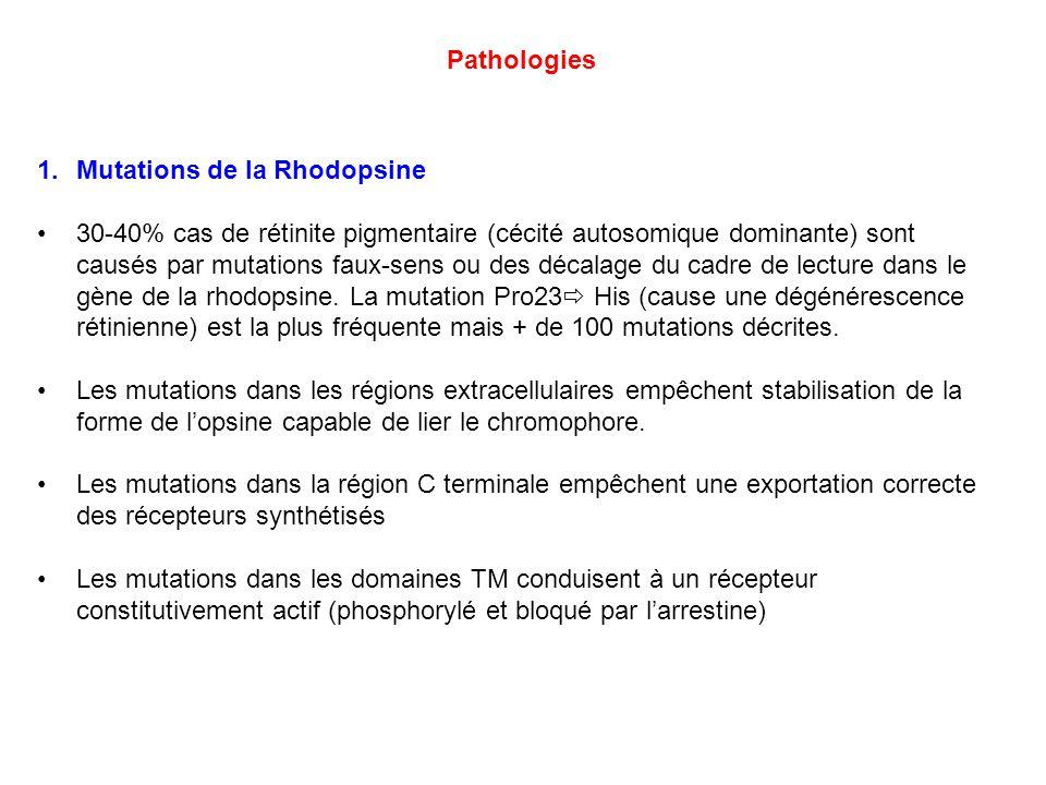 PathologiesMutations de la Rhodopsine.