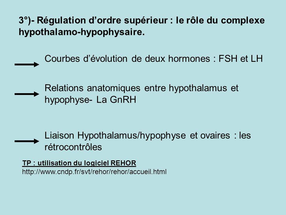 Courbes d'évolution de deux hormones : FSH et LH