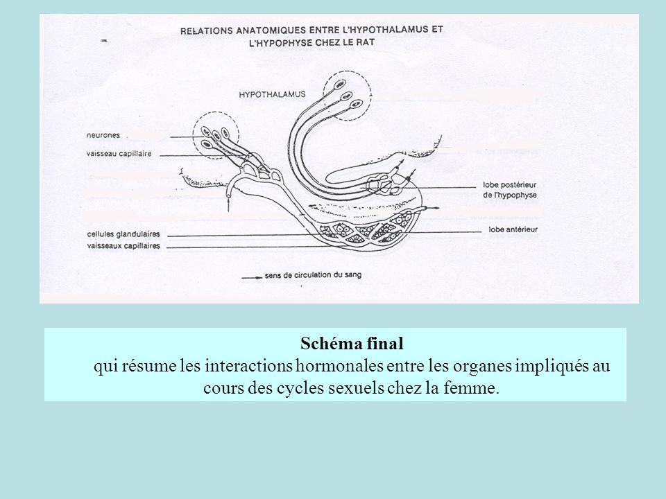 Schéma finalqui résume les interactions hormonales entre les organes impliqués au cours des cycles sexuels chez la femme.