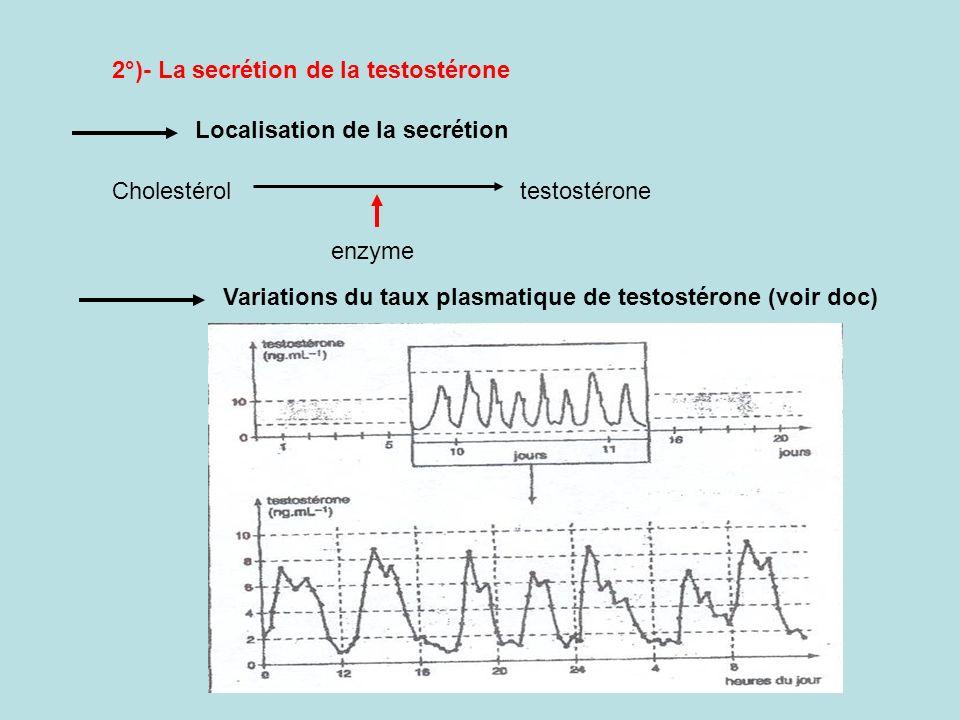 2°)- La secrétion de la testostérone
