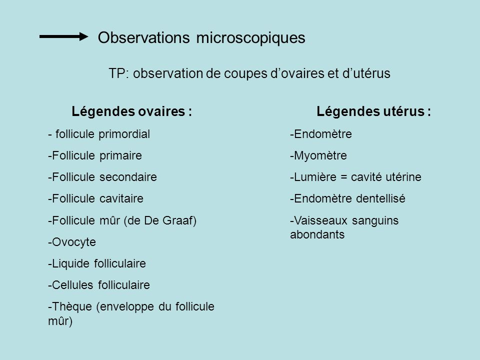Observations microscopiques