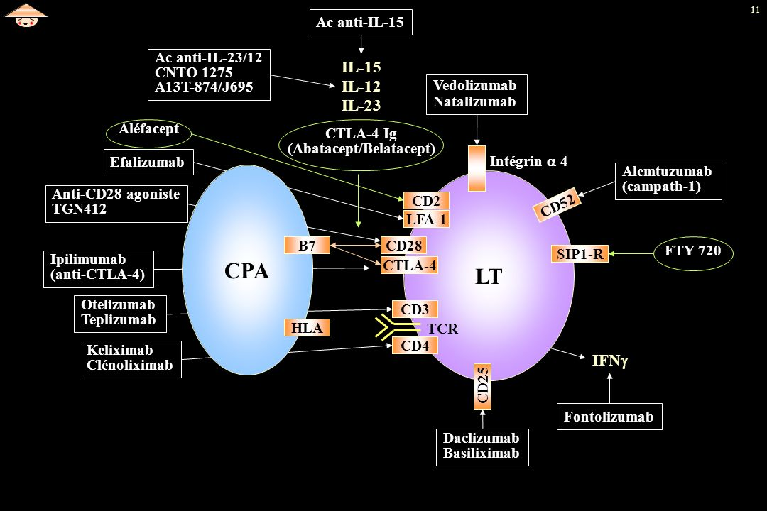 CTLA-4 Ig (Abatacept/Belatacept)
