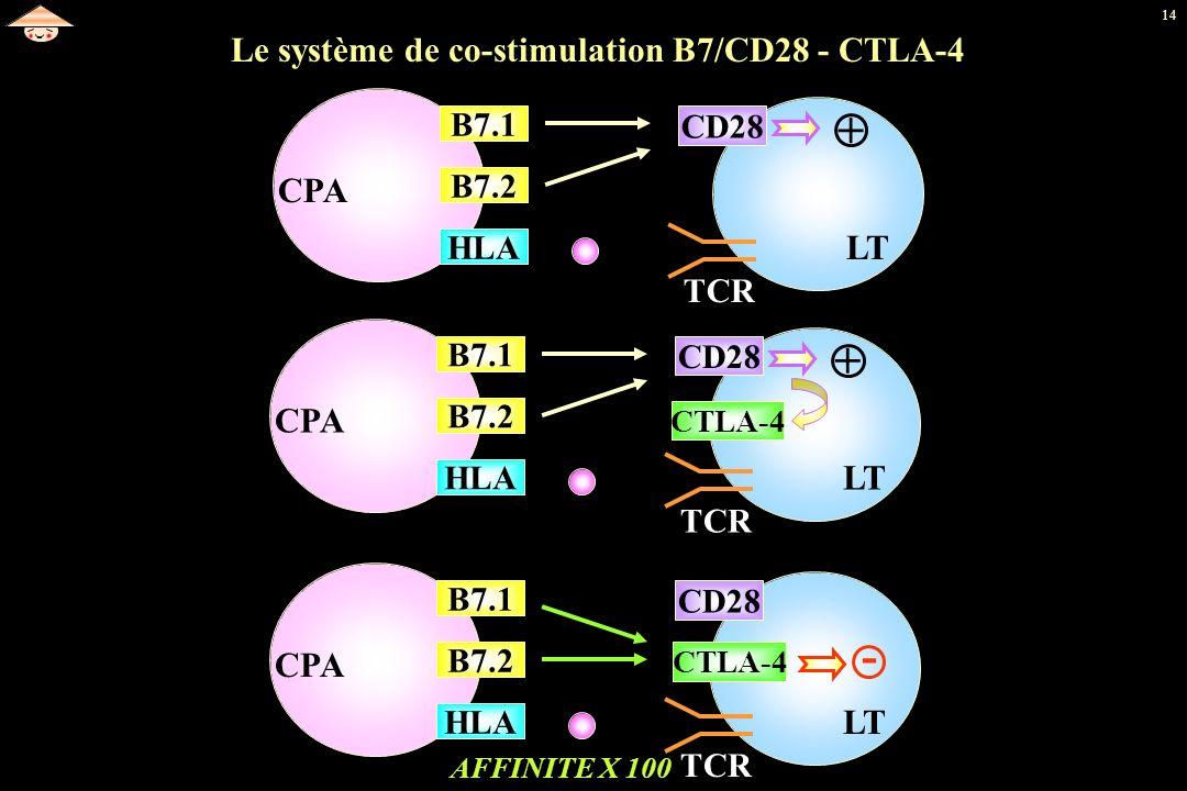 Le système de co-stimulation B7/CD28 - CTLA-4