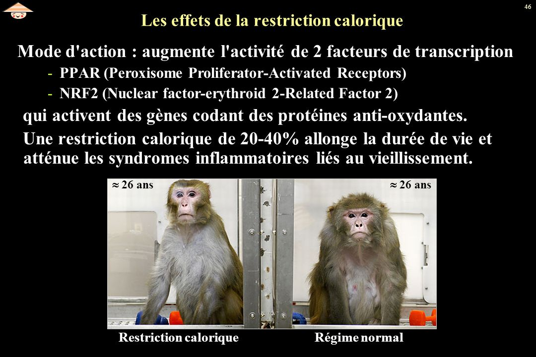 Les effets de la restriction calorique