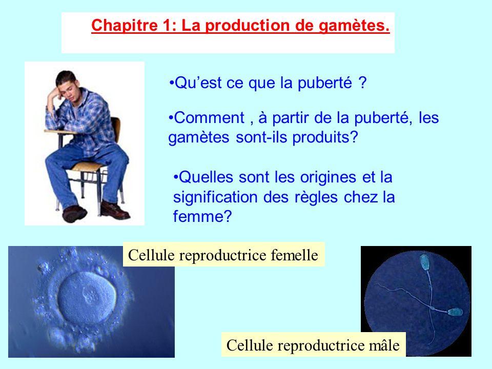 Chapitre 1: La production de gamètes.