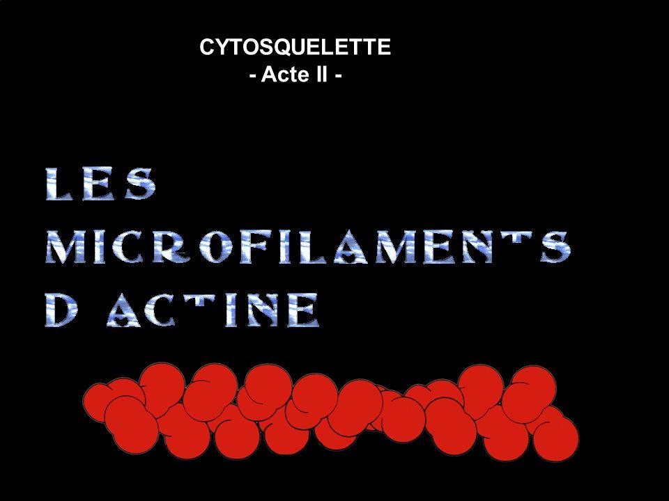 CYTOSQUELETTE - Acte II -