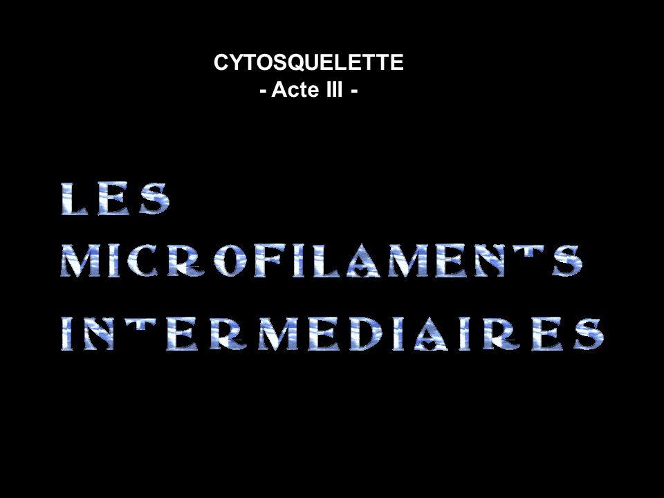 CYTOSQUELETTE - Acte III -
