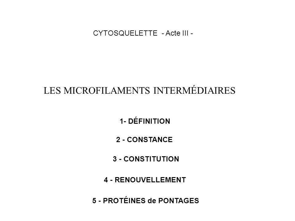 LES MICROFILAMENTS INTERMÉDIAIRES