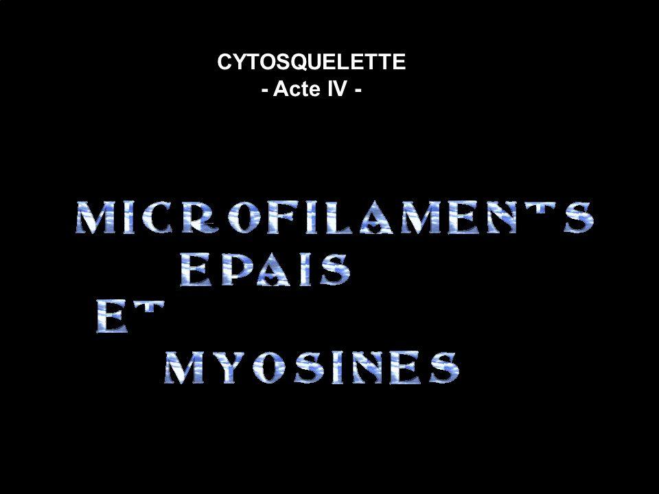 CYTOSQUELETTE - Acte IV -