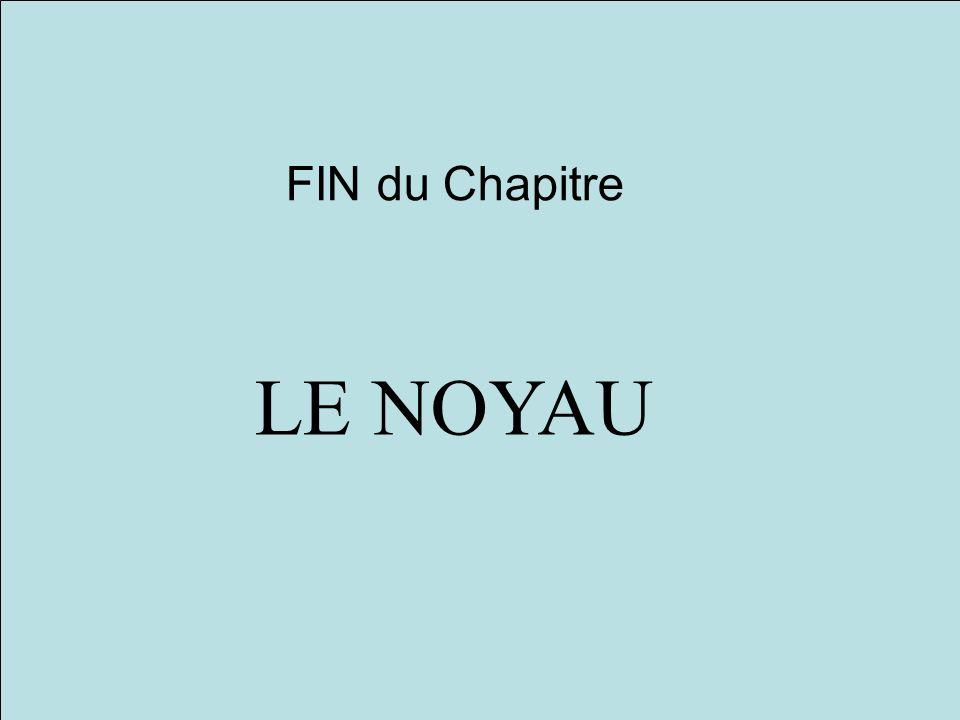 FIN du Chapitre LE NOYAU