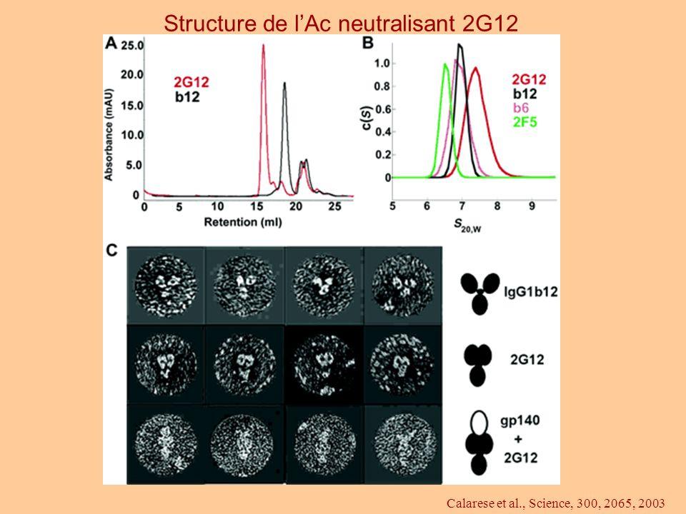 Structure de l'Ac neutralisant 2G12