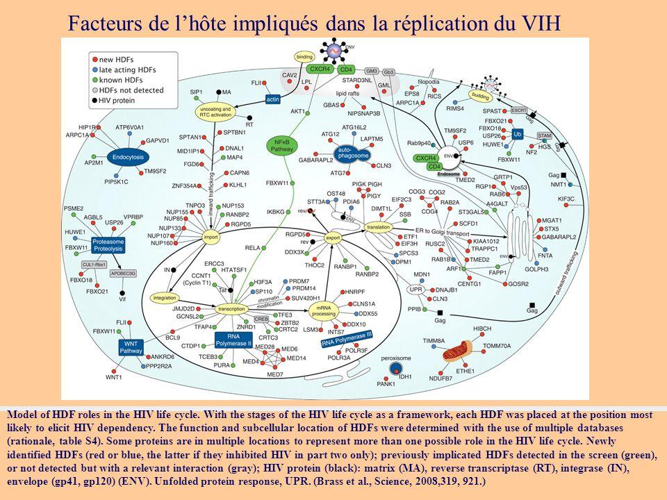 Facteurs de l'hôte impliqués dans la réplication du VIH