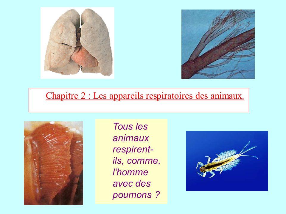 Chapitre 2 : Les appareils respiratoires des animaux.