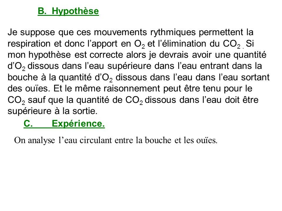 B. Hypothèse