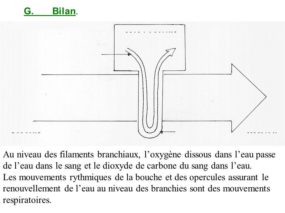 G. Bilan.Au niveau des filaments branchiaux, l'oxygène dissous dans l'eau passe de l'eau dans le sang et le dioxyde de carbone du sang dans l'eau.