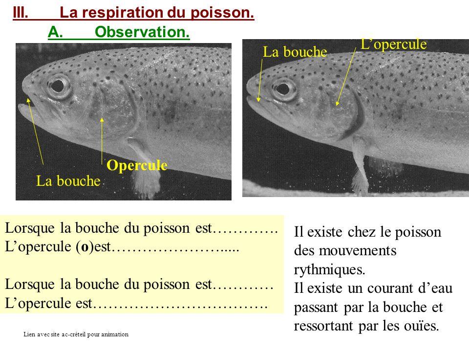 III. La respiration du poisson. A. Observation. L'opercule La bouche