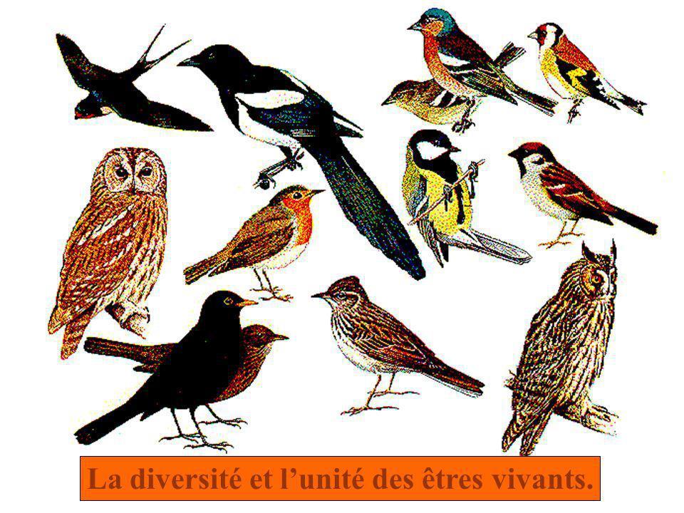 La diversité et l'unité des êtres vivants.