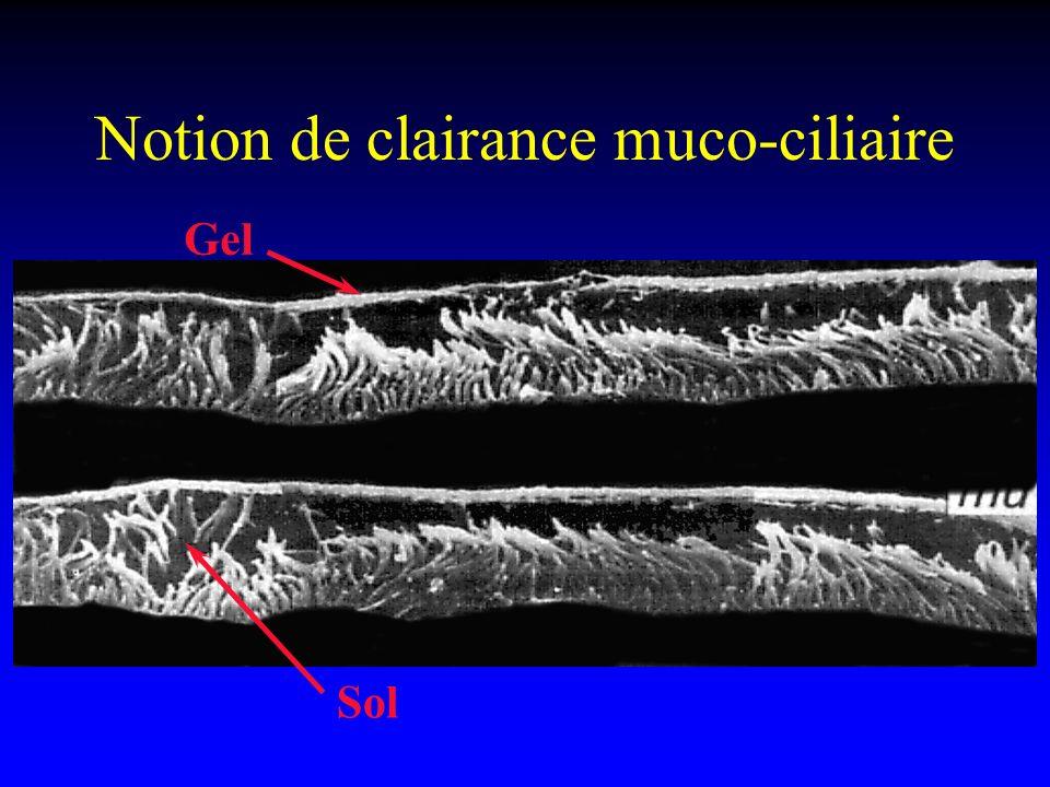 Notion de clairance muco-ciliaire