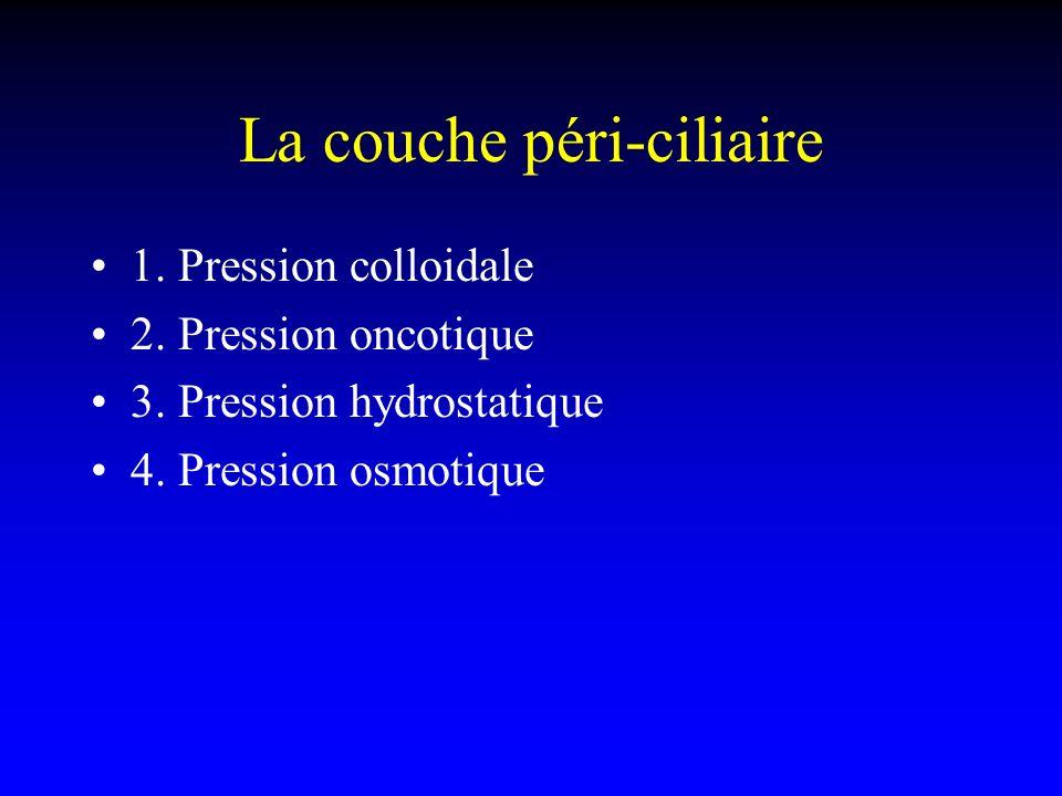 La couche péri-ciliaire