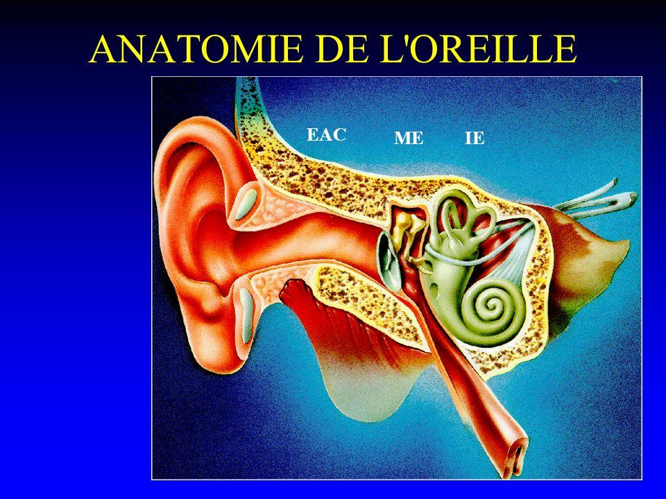 ANATOMIE DE L OREILLE EAC ME IE