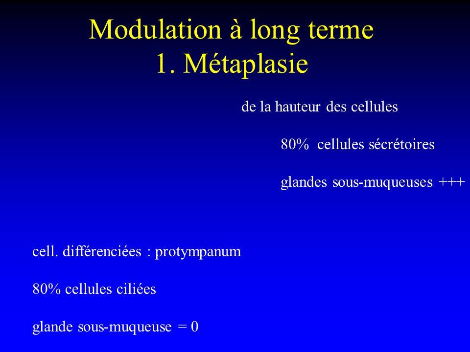 Modulation à long terme 1. Métaplasie