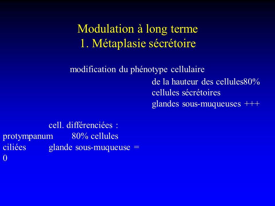 Modulation à long terme 1. Métaplasie sécrétoire