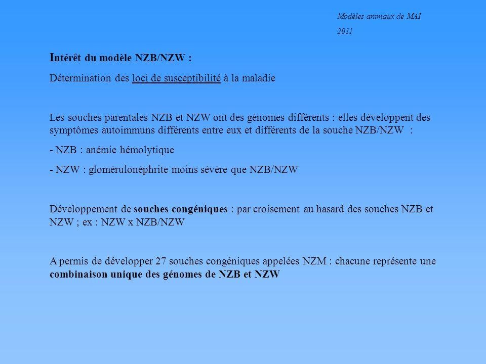 Intérêt du modèle NZB/NZW :