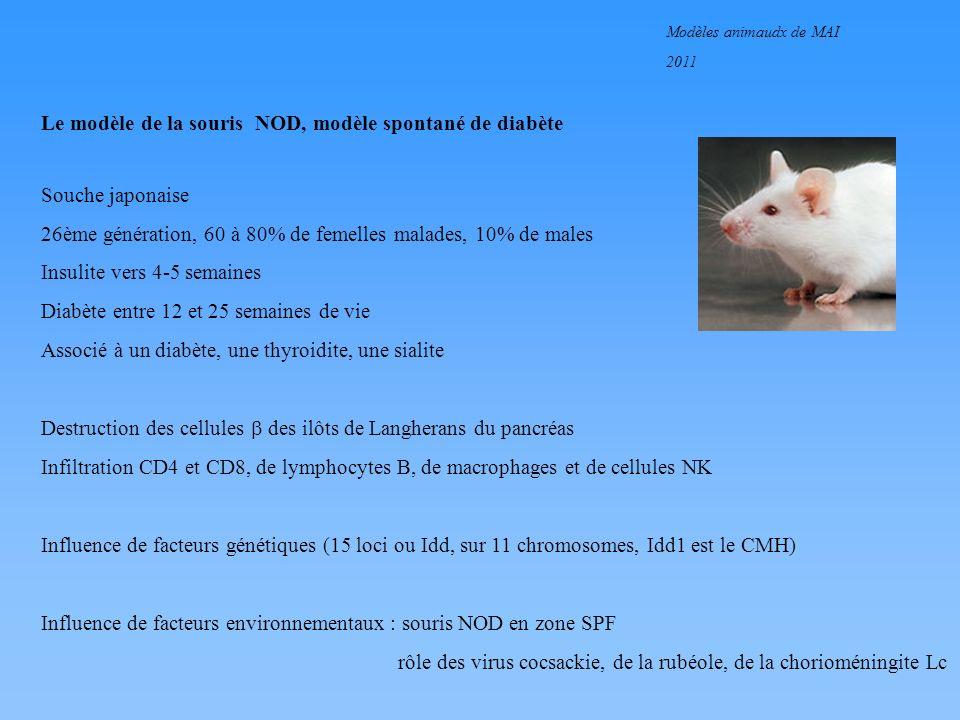 Le modèle de la souris NOD, modèle spontané de diabète