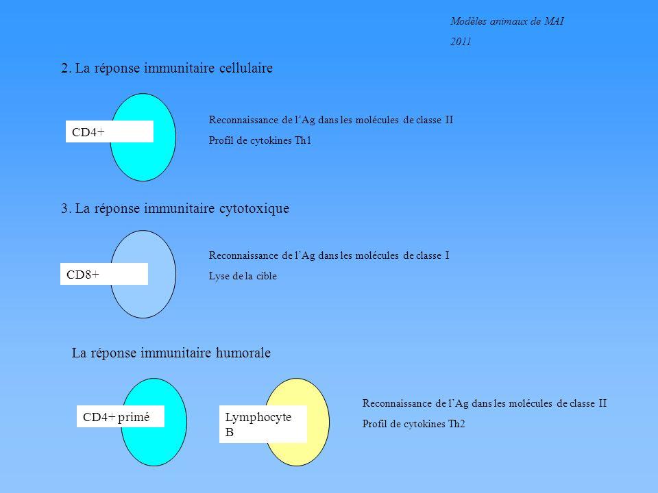 2. La réponse immunitaire cellulaire