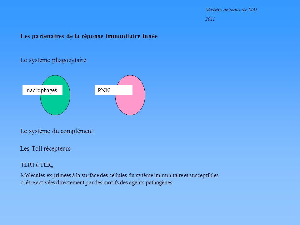 Les partenaires de la réponse immunitaire innée