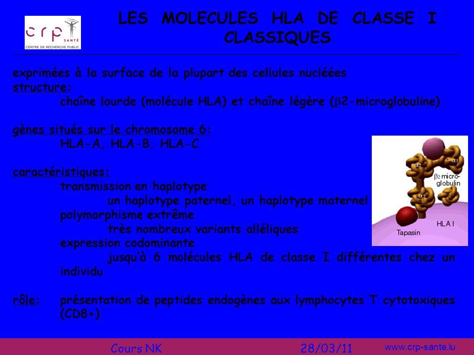 LES MOLECULES HLA DE CLASSE I CLASSIQUES