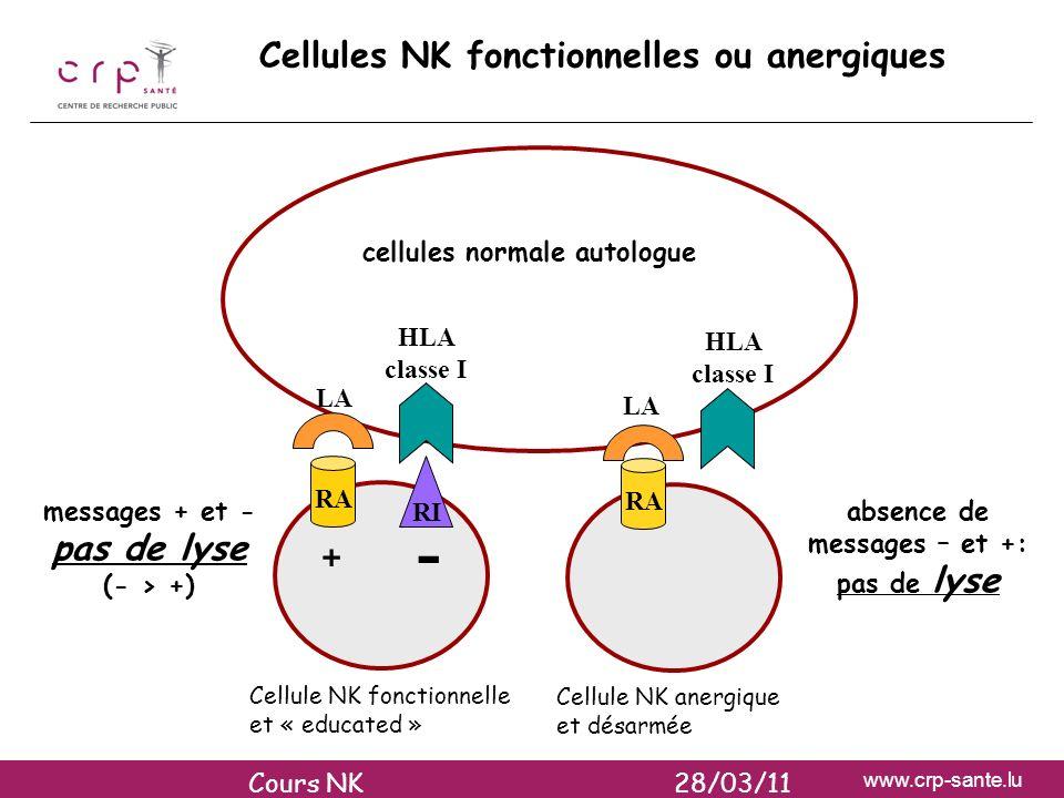 - Cellules NK fonctionnelles ou anergiques +