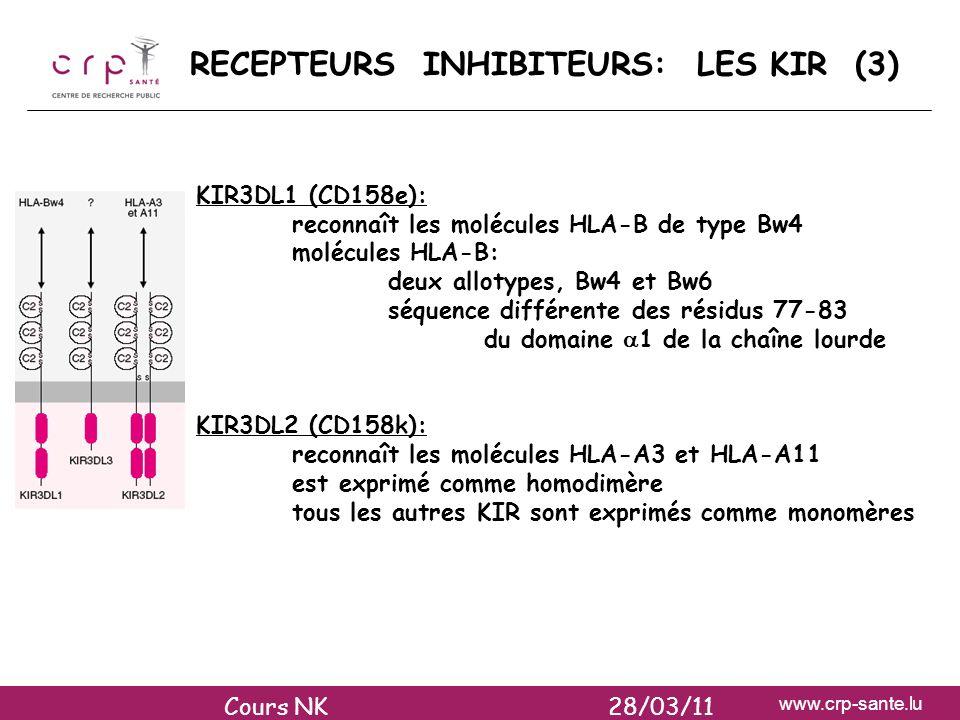 RECEPTEURS INHIBITEURS: LES KIR (3)