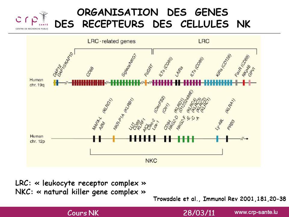 ORGANISATION DES GENES DES RECEPTEURS DES CELLULES NK