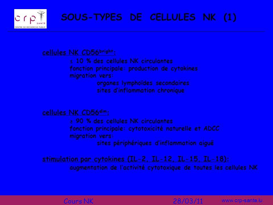 SOUS-TYPES DE CELLULES NK (1)
