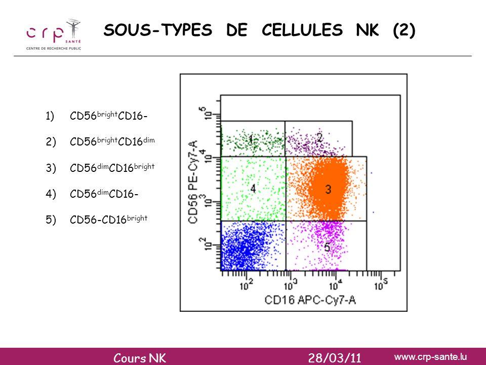 SOUS-TYPES DE CELLULES NK (2)